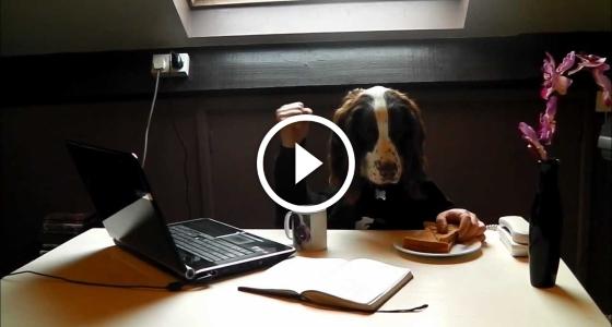 Коли твій бос – собака