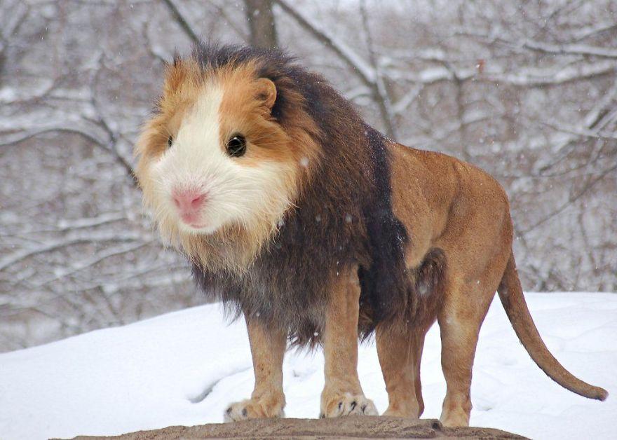 02-Guinea-Lion__880