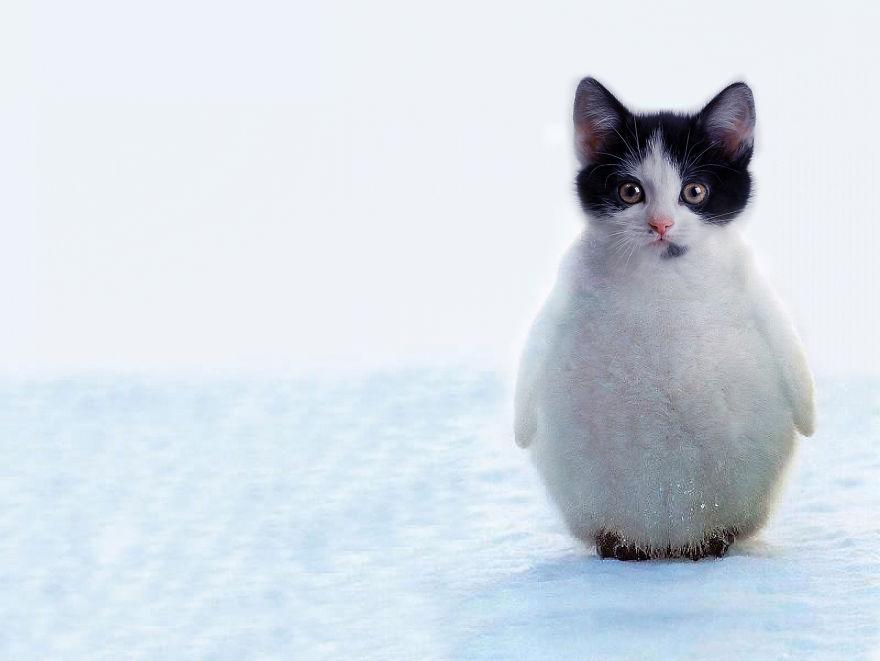 Що буде, якщо схрестити кота і пінгвіна?