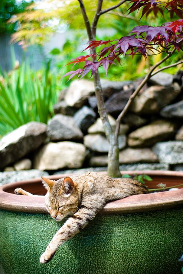 cat-in-flowerpot-38__605