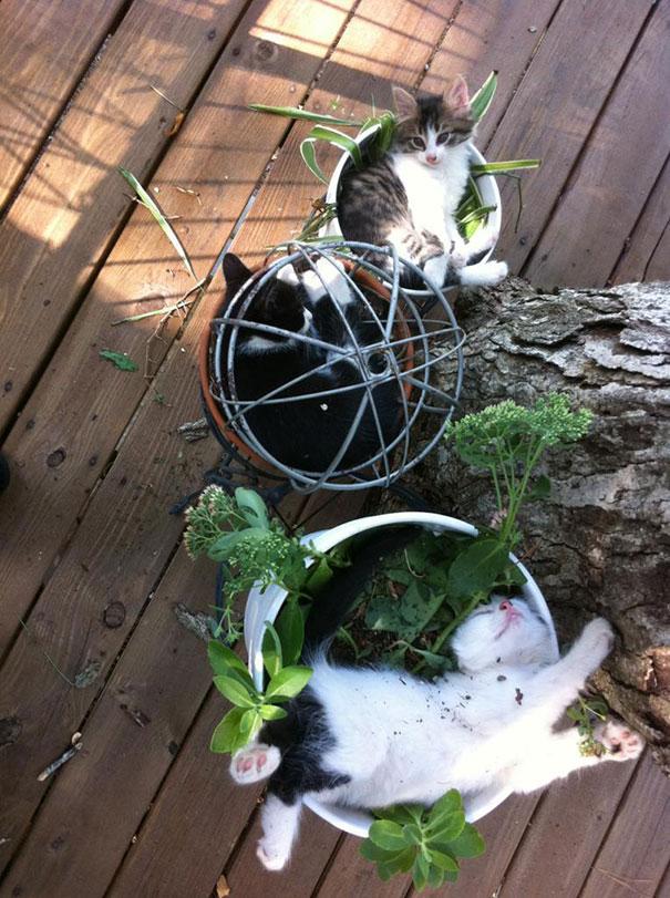 cat-in-flowerpot-5__605