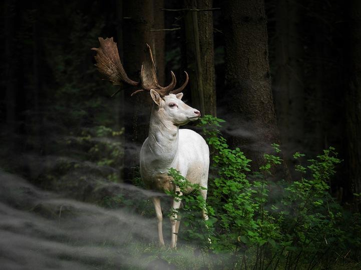 deer-sony