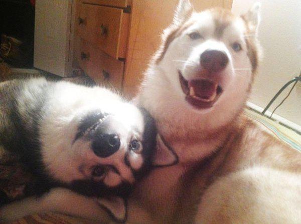 dog-dogs-bffs-best-friends-11