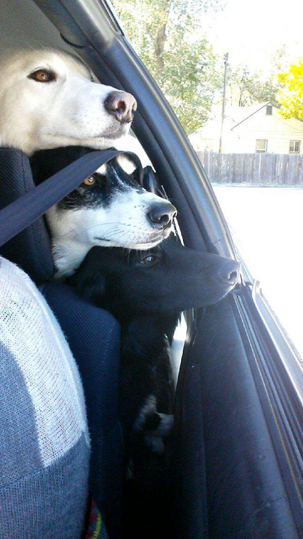 dog-dogs-bffs-best-friends-15