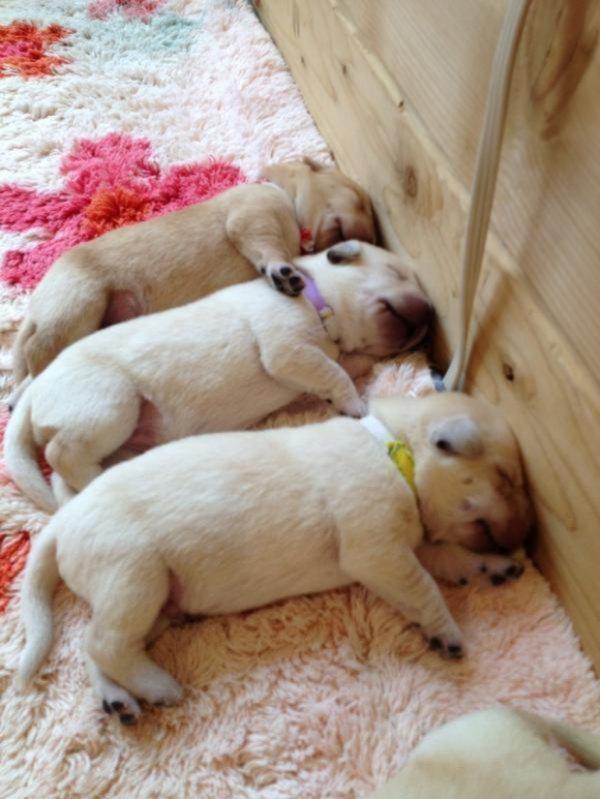 dog-dogs-bffs-best-friends-17