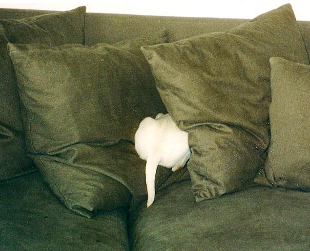 dogs-hide-seek-6__605