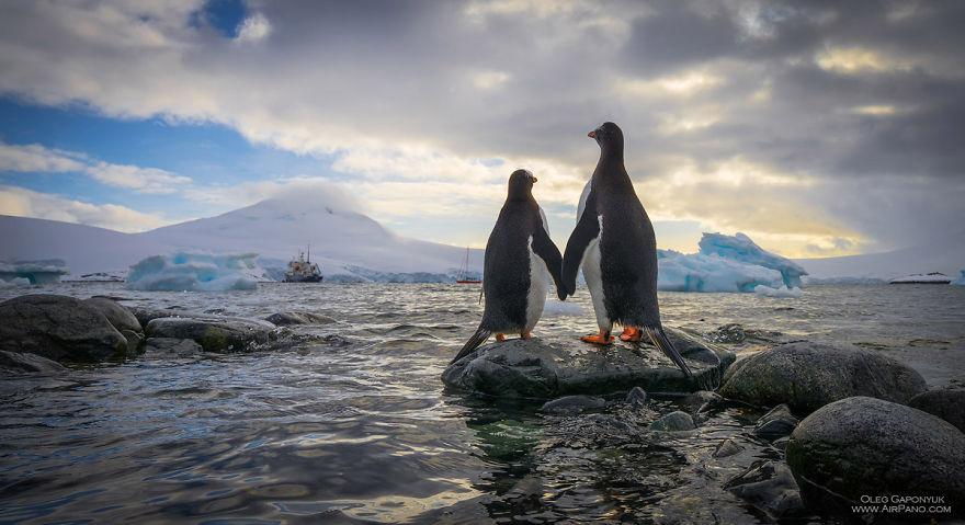 Дивовижні фото Антарктиди, які крізь призму льоду передають найтепліші почуття