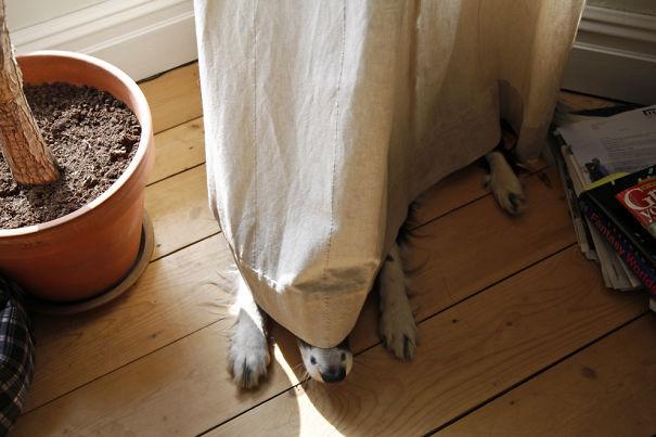 hiding-ninja-funny-dogs-161__605