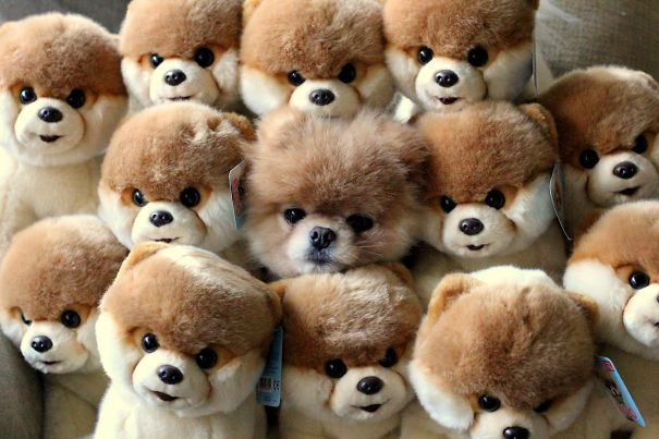hiding-ninja-funny-dogs-231__605
