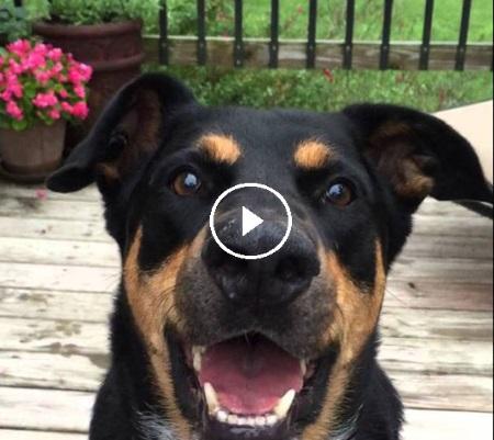 Про що шепочуть собаки