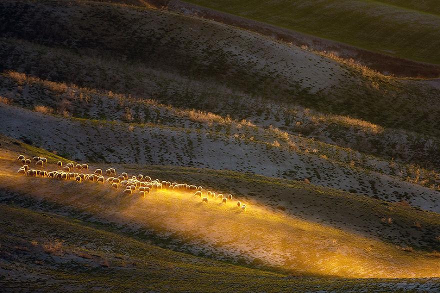 Dusty-herd-950__880