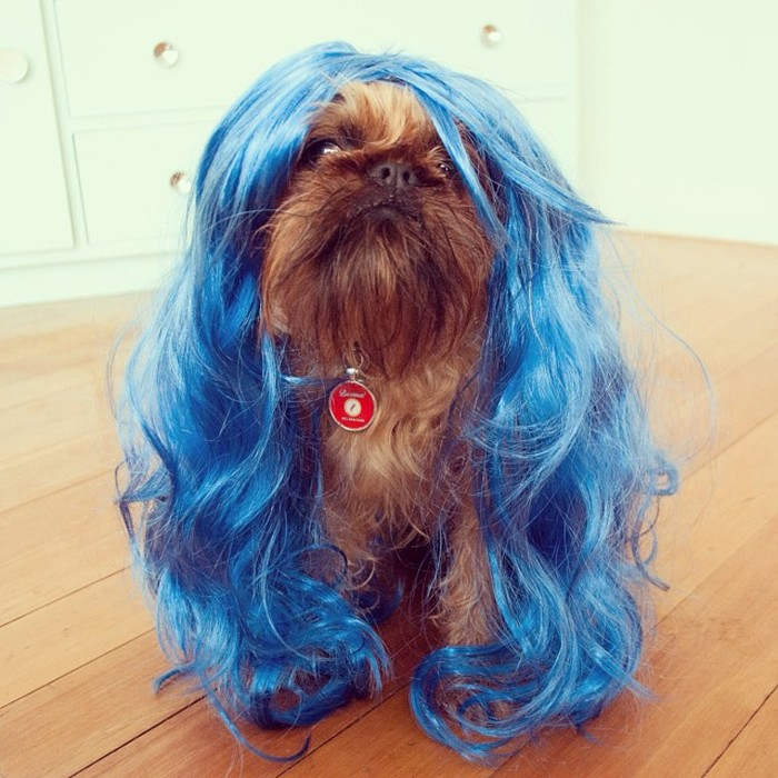 Fashion-Dogs-Puppies-18