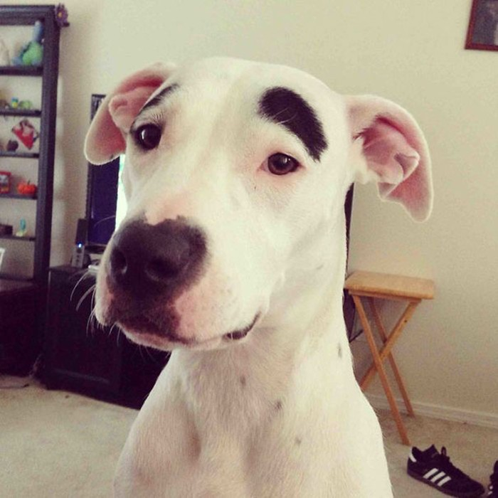 Funny-Animal-Markings-01