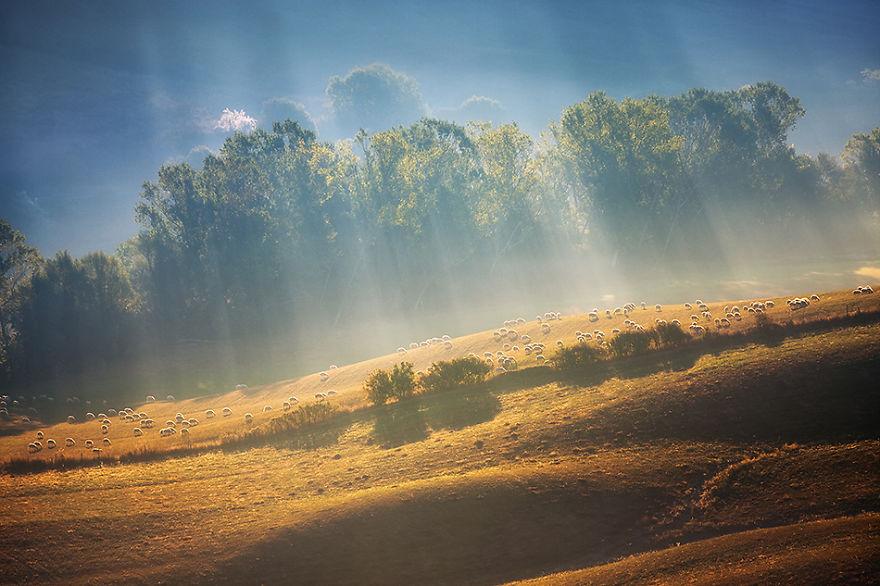Красиві фото. Вівчарство на Тосканських полях