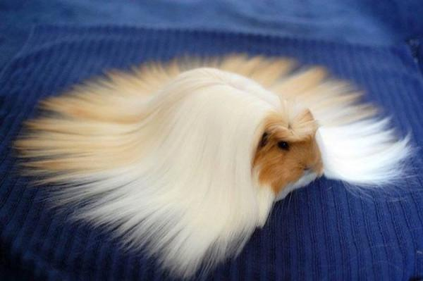 animals-who-are-having-killer-hair-days-24-photos-24