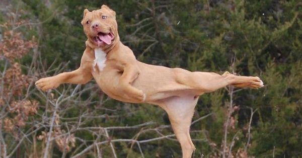 """У собак теж бувають """"вдалі"""" фото :)"""