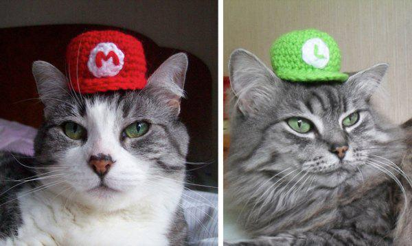 geeky-pet-products-accessories-13