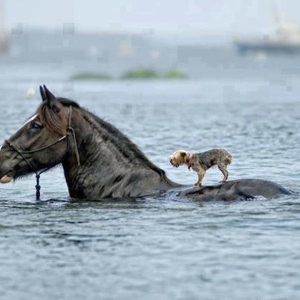Helping-animals-14