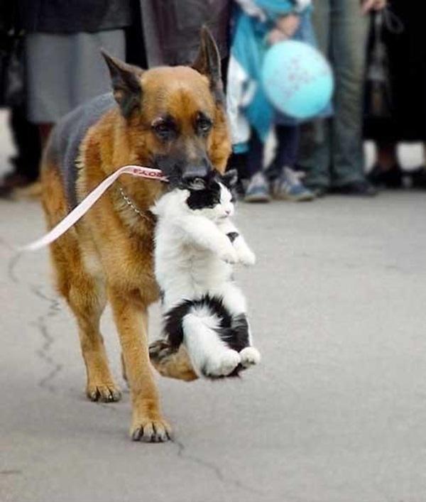 Helping-animals-20