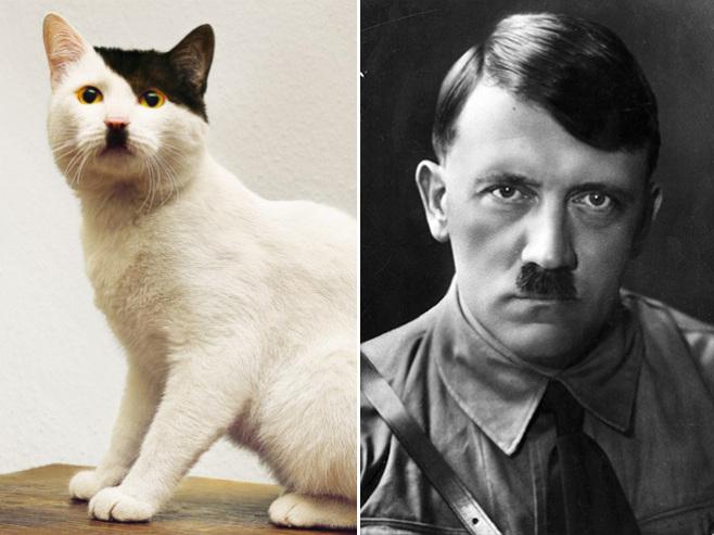 Коти, які неймовірно схожі на когось