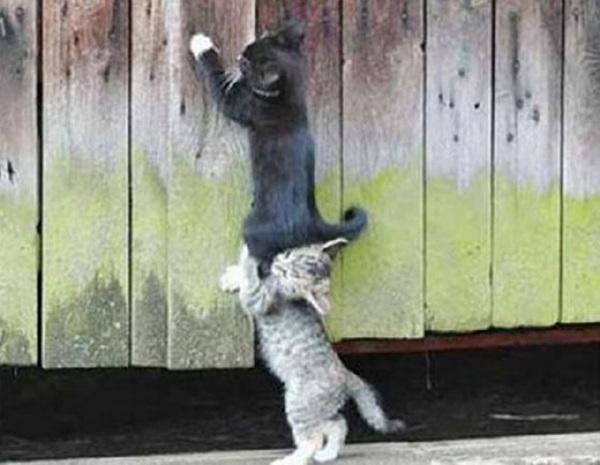 helping-animals-8-1