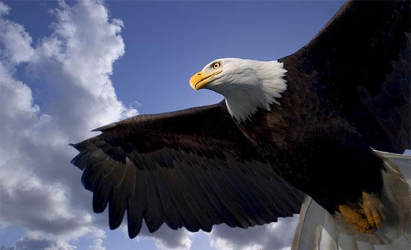 Неймовірний політ орла