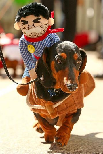 dressing-cowboy_3445841k
