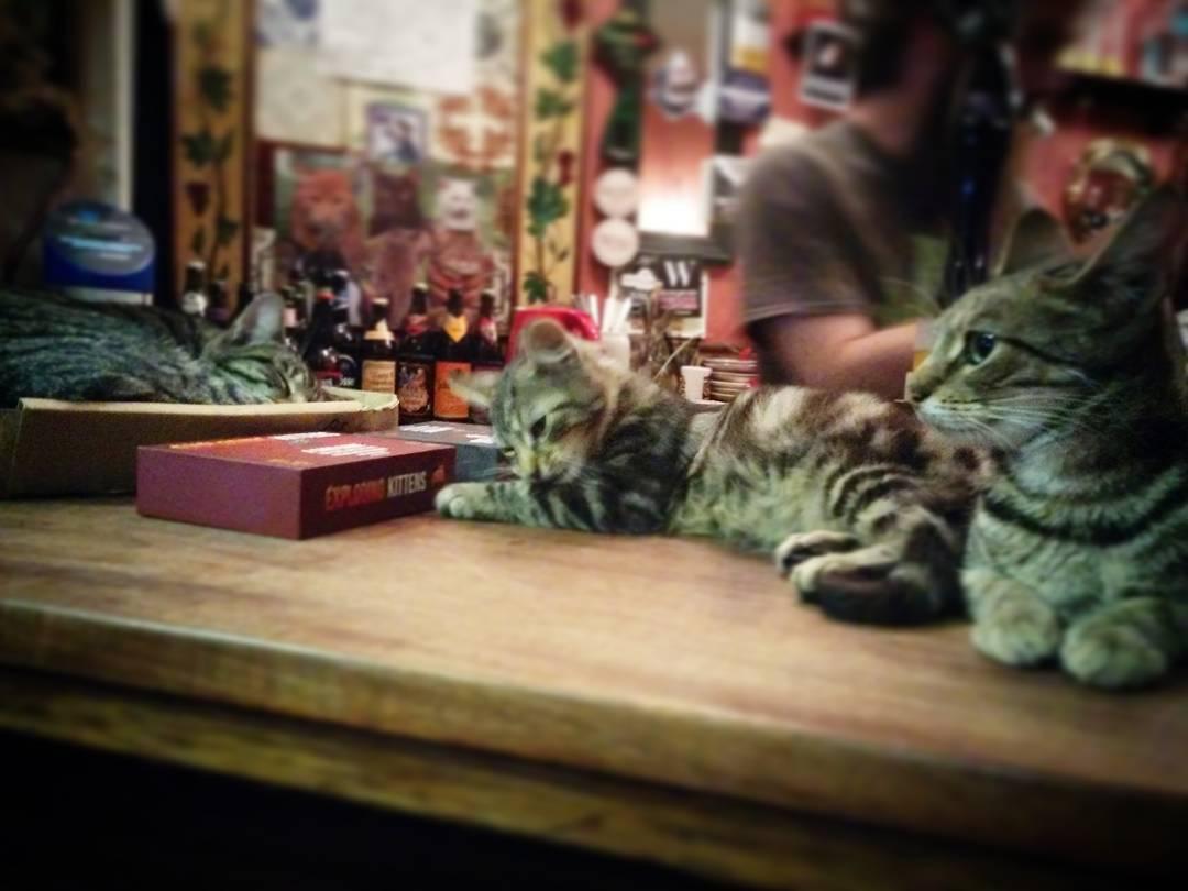 Котячий паб