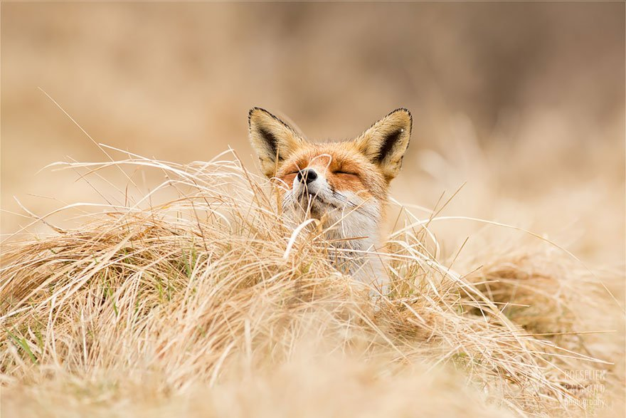 Притча про хитрого лиса