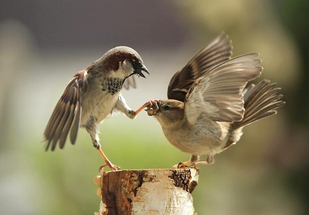 10 фото птахів, зроблених в правильний момент