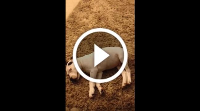 Пес злякався власного пукання