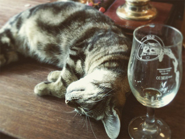 pub-in-bristol-is-the-cats-whiskers-16