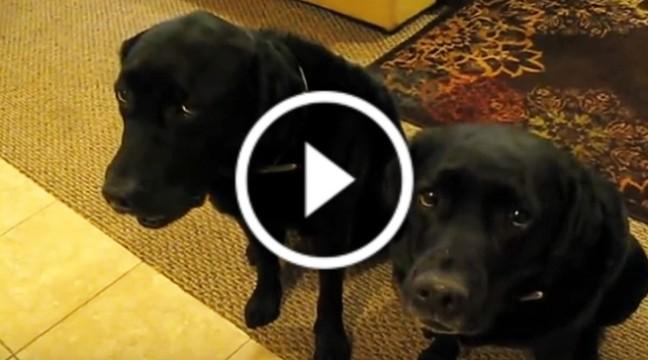 Смішні пси: Хто вкрав печиво? Зізнавайтесь