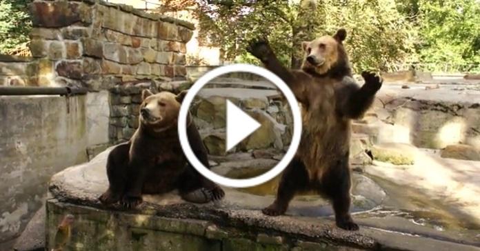Ведмеді читають реп
