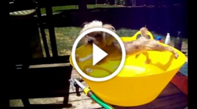 Собаки, які ненавидять купатись