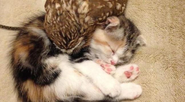 Кошеня і совеня