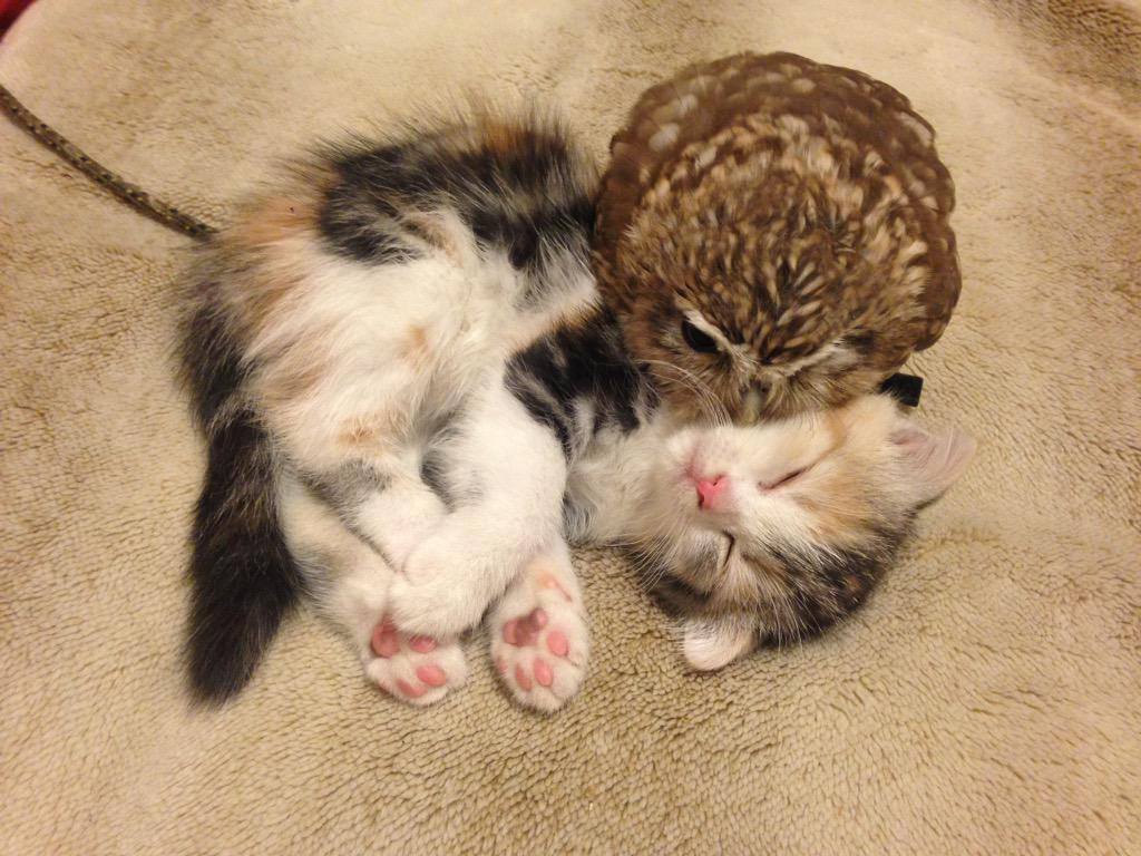 Kitten-and-Owl