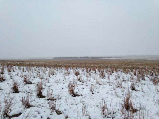 На цьому фото не менше 500 овечок