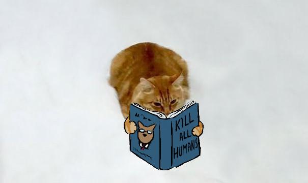 Дотепні коти. 10 малюнків