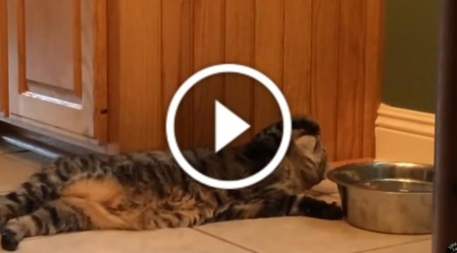 Цей кіт п'є воду, наче сам король