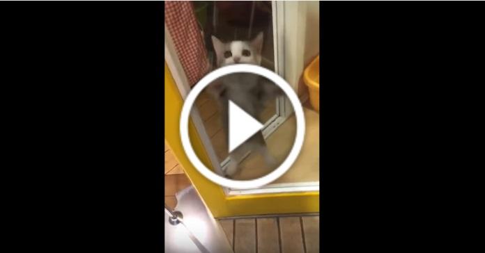 Господар повернувся додому. У кошеняти просто неймовірна реакція!