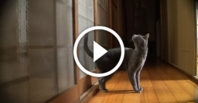 Цей кіт вміє стукати у двері