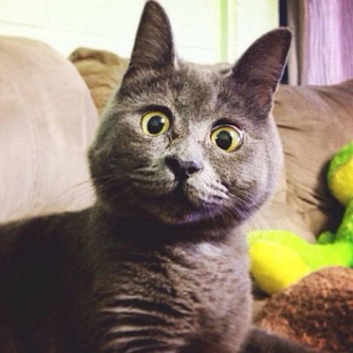 Вічно здивований кіт Кевін