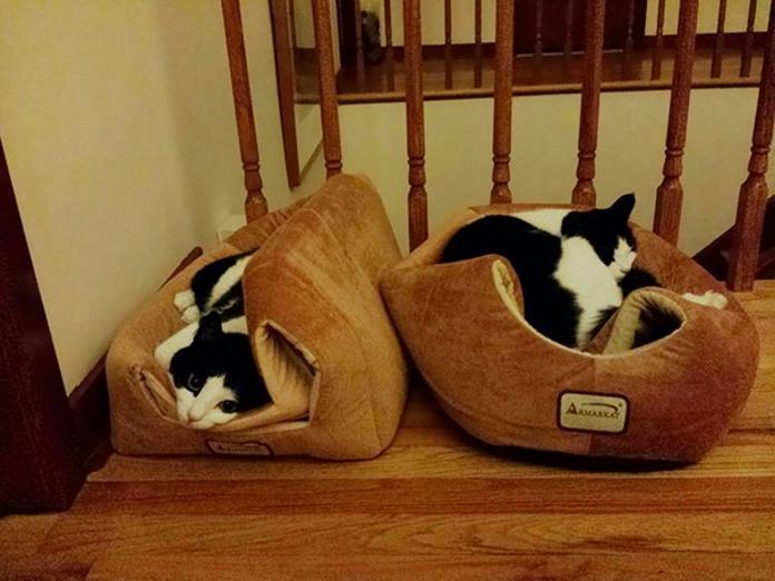 Коти-логіки