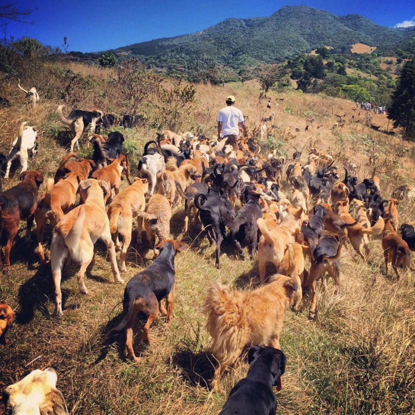 land-of-the-strays-a-paradise-for-900-dogs-where-they-roam-free-and-happy7-830x830