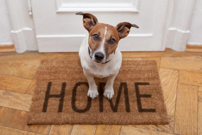 15 причин, чому ми не любимо залишати собак вдома