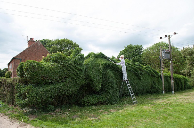 JohnBrooker_hedge_dragon_01