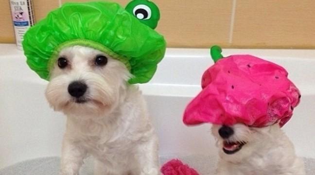 13 корисних лайфхаків для власників собак