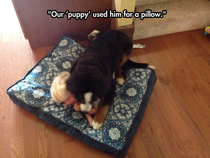 funny-baby-crying-dog-bed