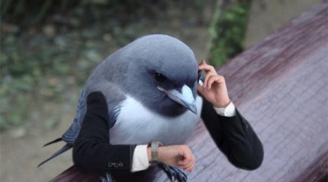 """Погралися і """"прифотошопили"""" птахам руки, дивіться що вийшло :)"""